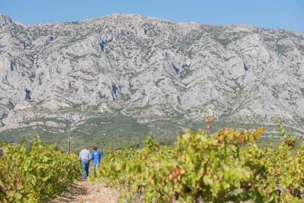 Vignoble Sainte Victoire
