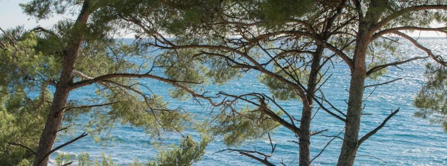 Liouquet Provence